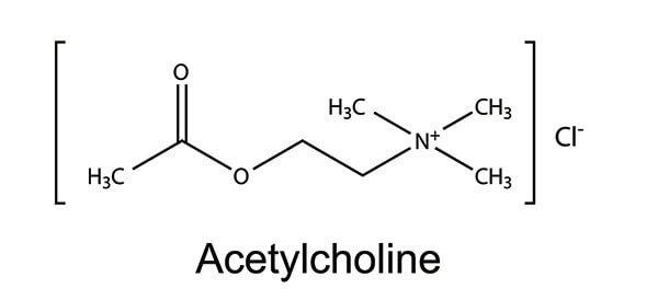 Молекула ацетилхолина